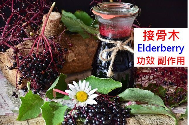 elderberry-benefits-side-effects