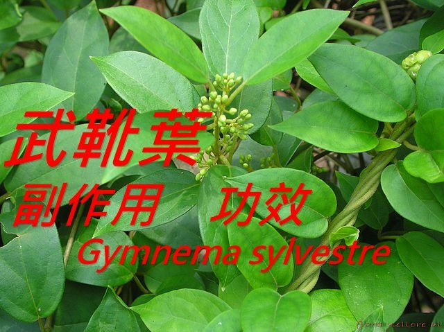 gymnema-sylvestre-benefit-side-effect